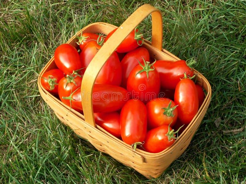 pomidor koszykowy obrazy stock