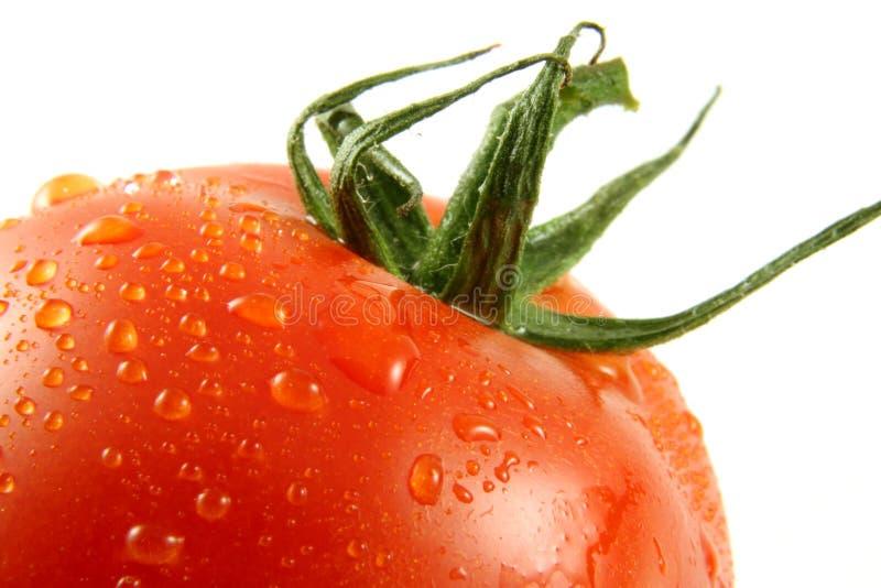 pomidor makro obrazy royalty free