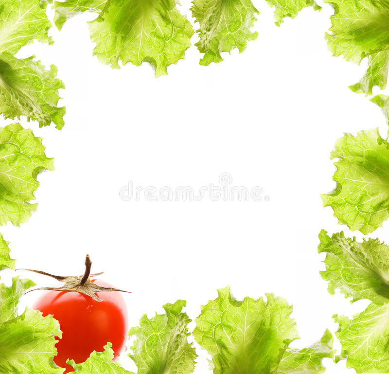 pomidor sałatkowy graniczny obraz stock