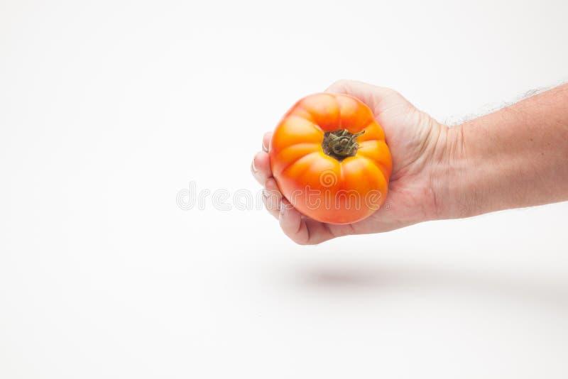 Pomidor w ręce na prostym tle obrazy royalty free