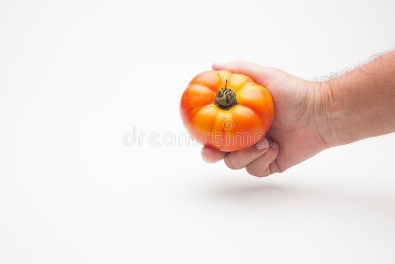 Pomidor w ręce na prostym tle obrazy stock