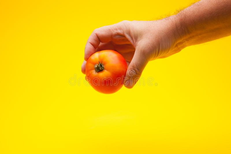 Pomidor w ręce na prostym tle fotografia royalty free