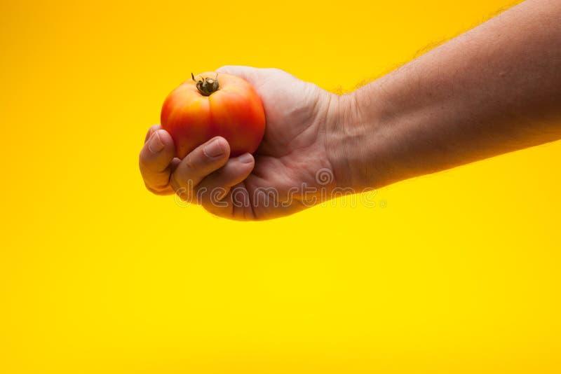 Pomidor w ręce na prostym tle zdjęcia stock