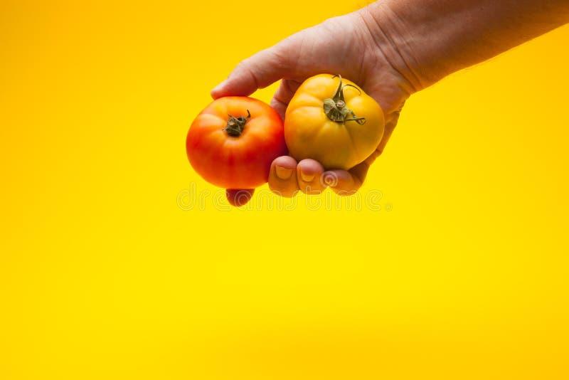Pomidor w ręce na prostym tle zdjęcie royalty free