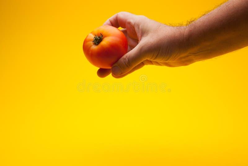 Pomidor w ręce na prostym tle obraz royalty free