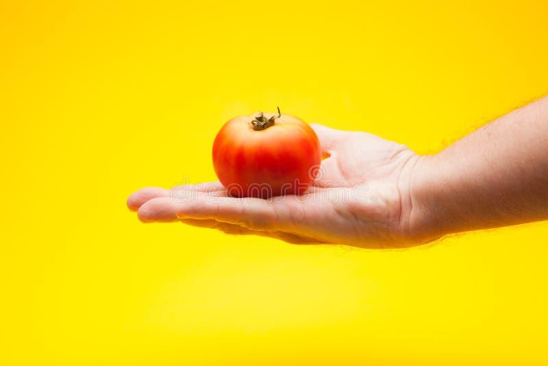 Pomidor w ręce na prostym tle obraz stock
