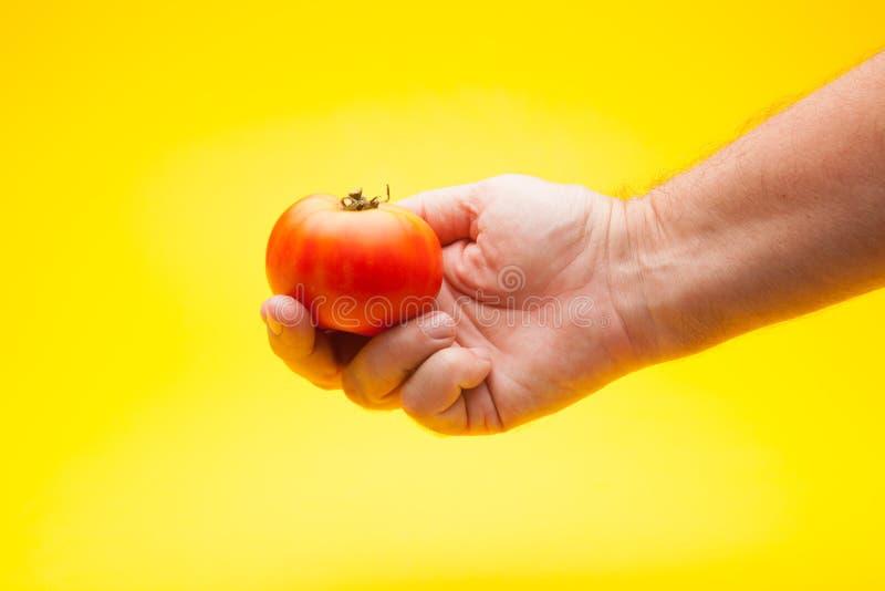 Pomidor w ręce na prostym tle zdjęcia royalty free