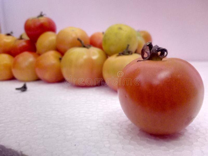 Pomidorowa czerwień - wyśmienicie zdjęcia royalty free