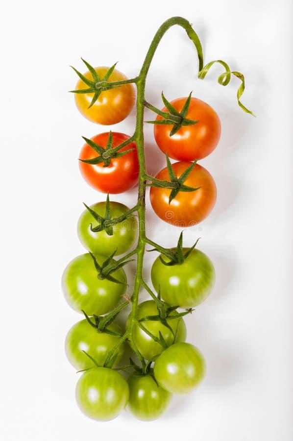 Pomidorowa wiązka zdjęcie stock