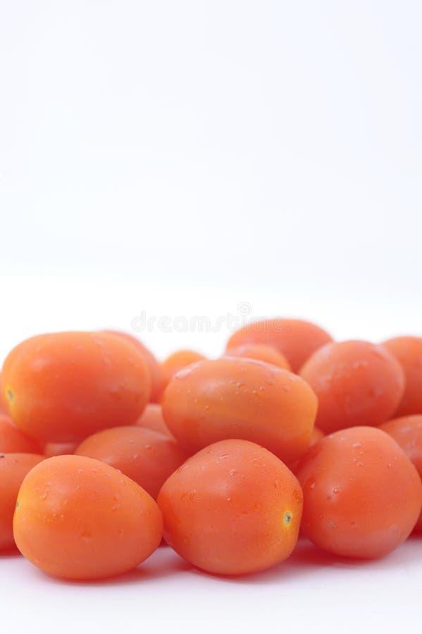 Pomidorowa wiśnia obraz stock