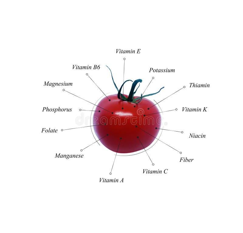 Pomidorowe odżywki Jarzynowa informacja ilustracja dieta zdrowa ilustracji