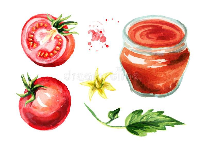 Pomidorowego kumberlandu set Akwareli ręka rysująca ilustracja, odizolowywająca na białym tle ilustracja wektor