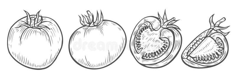 Pomidorowego plasterka ustalony wektor ilustracji