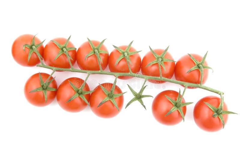 pomidorowy biel zdjęcia royalty free