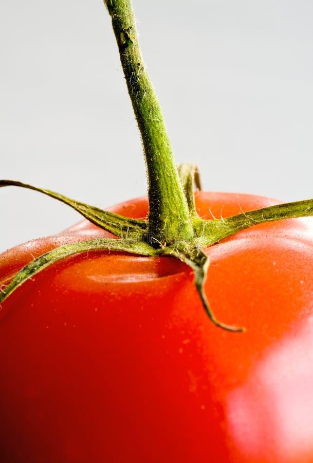 Pomidorowy szczegół fotografia royalty free