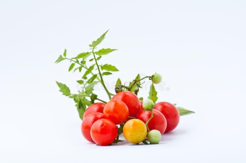 pomidorowy tło biel zdjęcia stock
