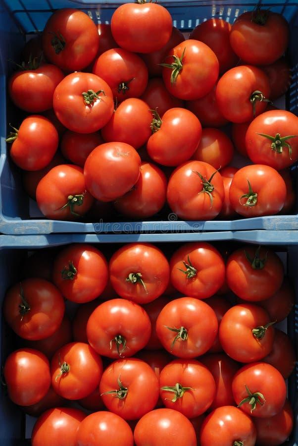 pomidorowy warzywo zdjęcie royalty free
