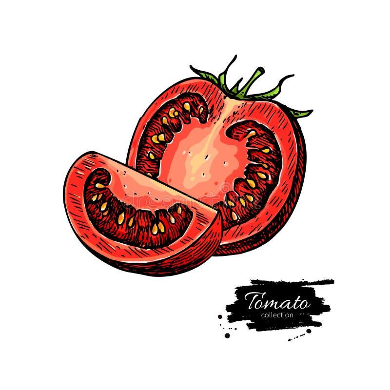 Pomidorowy wektorowy rysunek Odosobniony pomidor i pokrajać kawałek warzywo royalty ilustracja