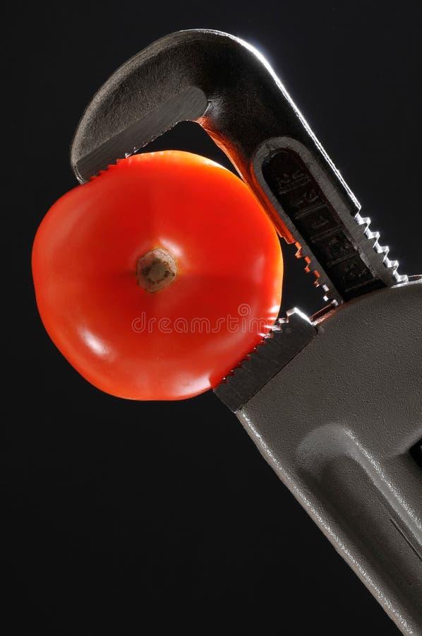 pomidorowy wyrwanie zdjęcie royalty free