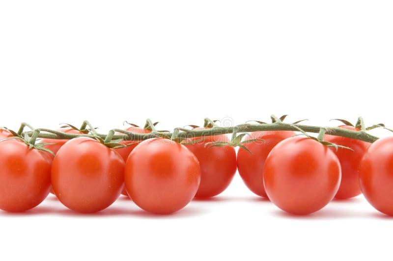 pomidorowy zbliżenie biel obrazy royalty free
