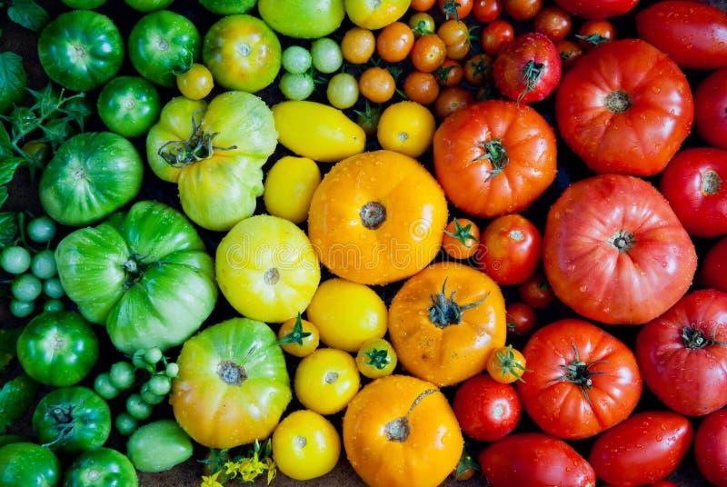 pomidory świeże organiczne obrazy stock