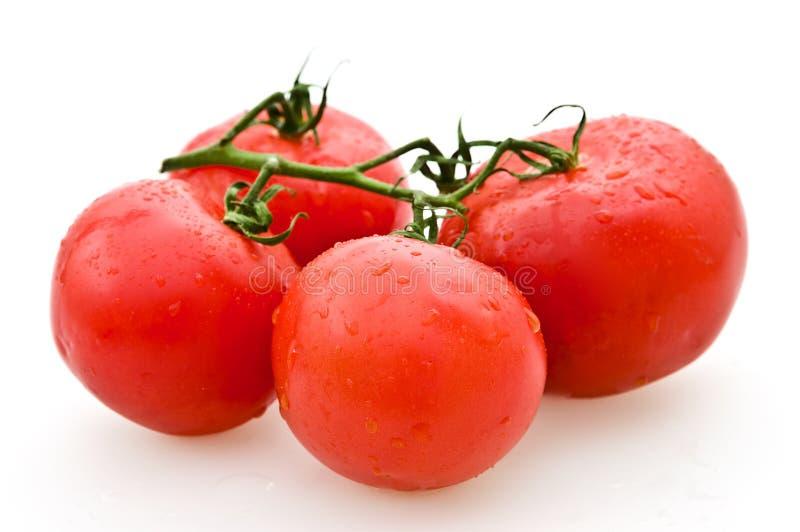 pomidory obraz royalty free