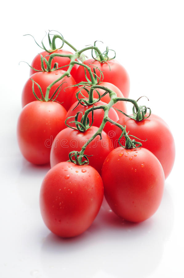Pomidory na winogradzie obrazy royalty free
