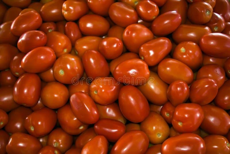 pomidory romów obraz royalty free