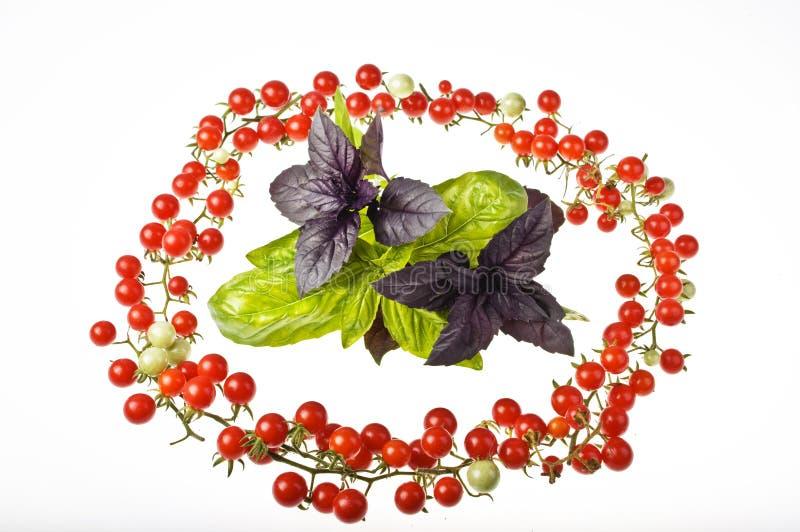 Pomidory z basilem obrazy stock