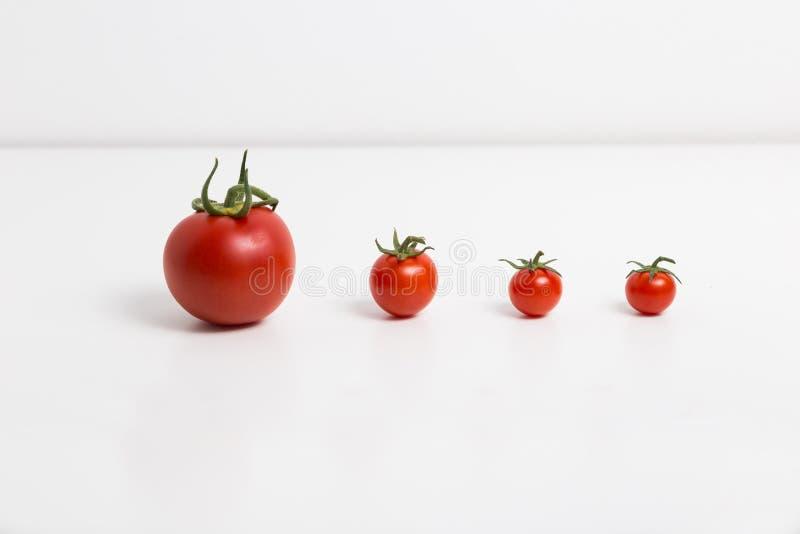 Pomidory z rzędu obrazy stock