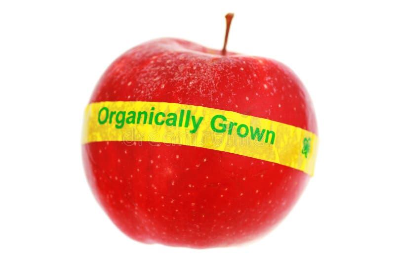 Pomme étiquetée organique photo libre de droits