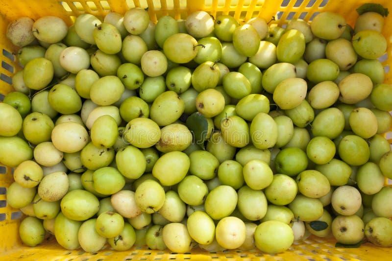 Pomme de callitriche photo libre de droits