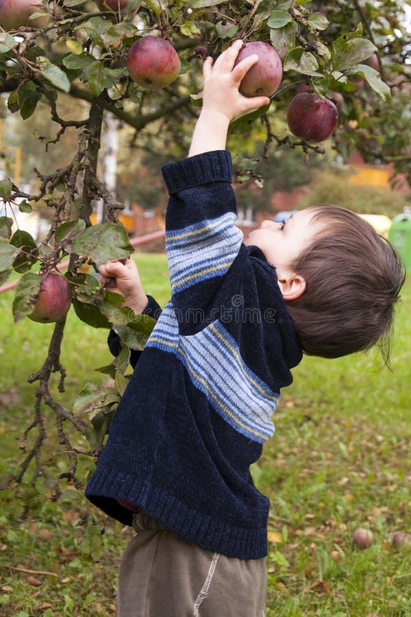 Pomme de cueillette d'enfant image stock
