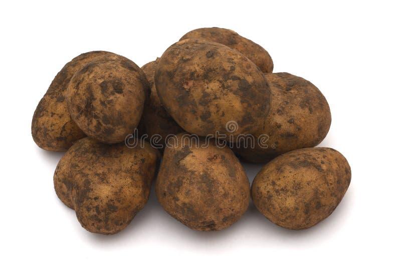 Pomme de terre crue modifiée photo stock