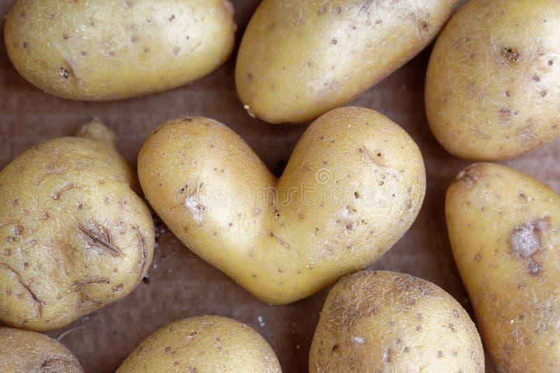 Pomme de terre de coeur entre les pommes de terre image stock