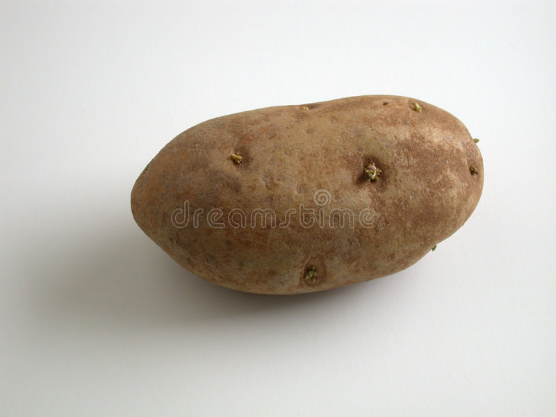 Pomme De Terre De Germination Photos stock