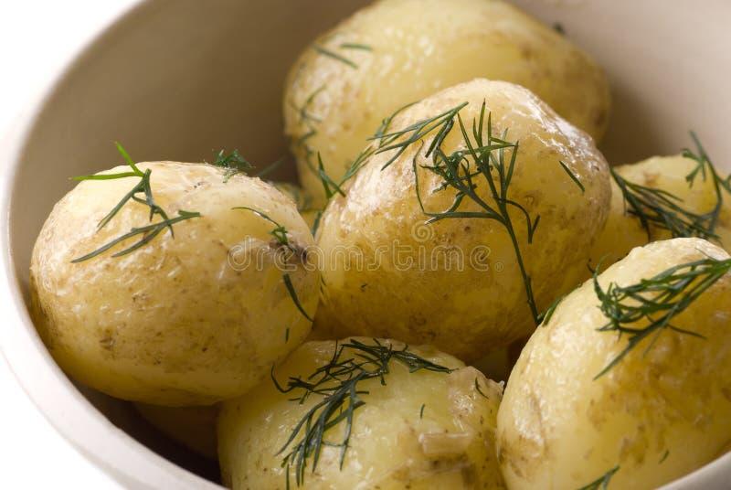 Pomme de terre de primeurs avec du beurre et l'aneth photo libre de droits