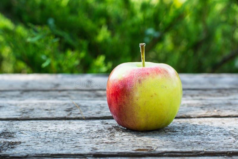 Pomme rouge et jaune mûre sur la table en bois Apple dans le jardin Concept végétarien D'automne de récolte toujours nourriture d images stock