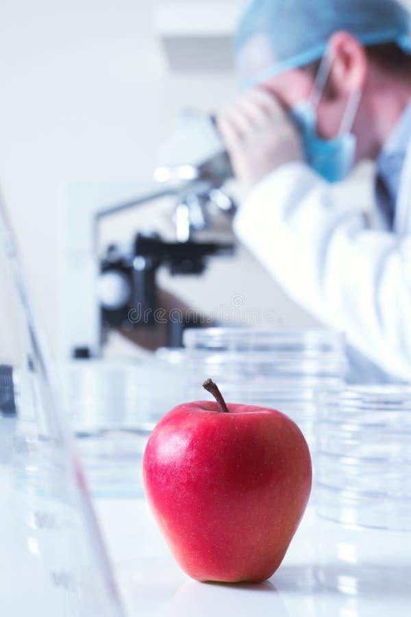 Pomme rouge génétiquement modifiée image libre de droits
