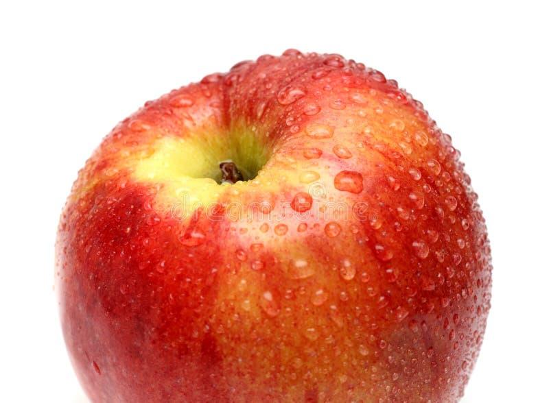 Pomme rouge humide avec des baisses de l'eau photographie stock