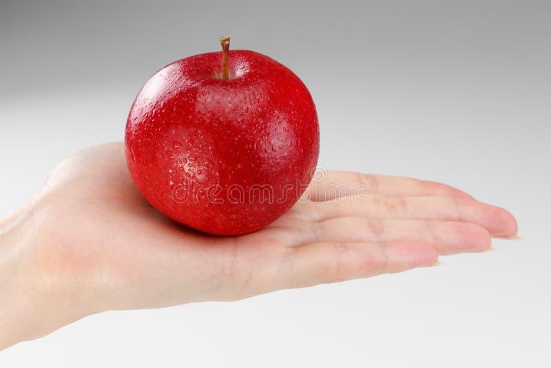 Pomme rouge mûre sur une paume femelle photo libre de droits