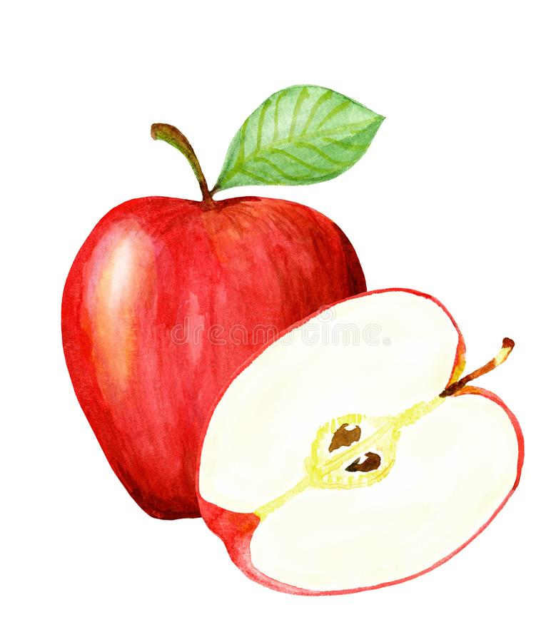 Pomme rouge tir?e par la main d'aquarelle Illustration naturelle d'isolement de fruit de nourriture d'eco sur le fond blanc illustration de vecteur