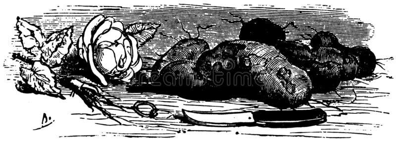 Pomme-terre-001 Free Public Domain Cc0 Image