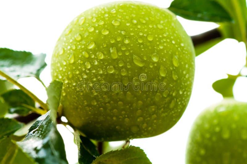 Download Pomme verte image stock. Image du nutritif, croûte, nutrition - 2913623