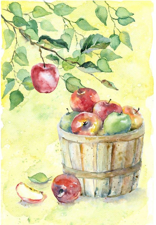 Pommes d'aquarelle sur la branche illustration libre de droits