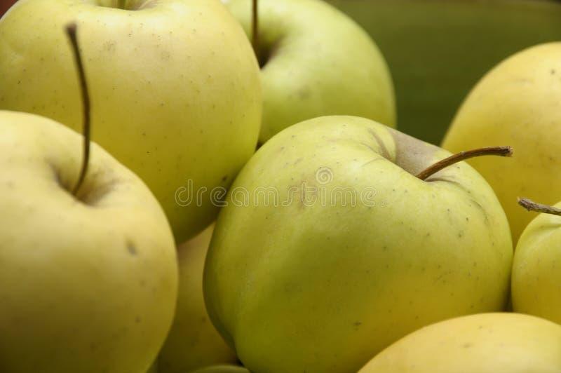 Pommes d'or jaunes et vertes photos stock