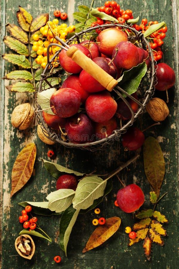 Pommes dans le panier photo libre de droits