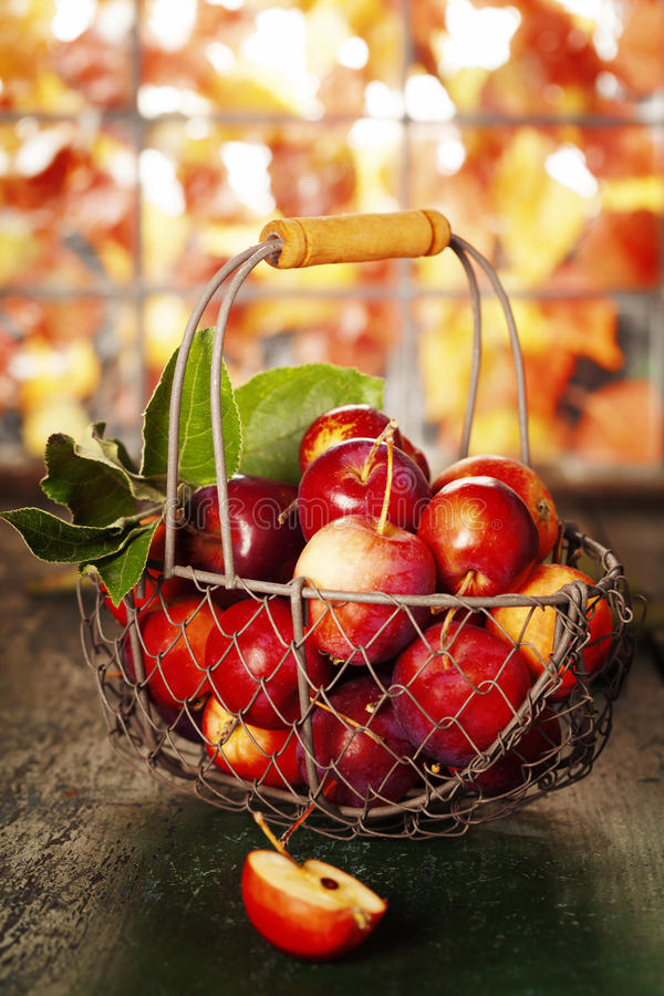 Pommes dans le panier photographie stock