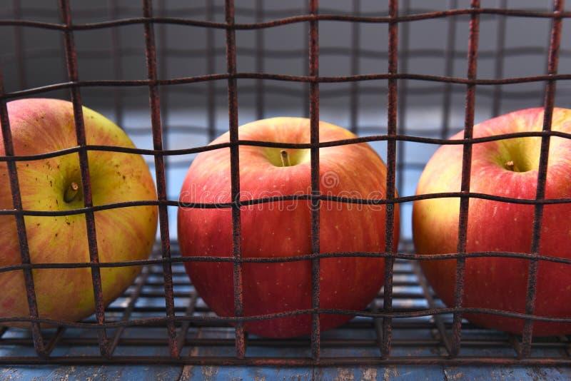 Pommes dans le panier en métal images libres de droits