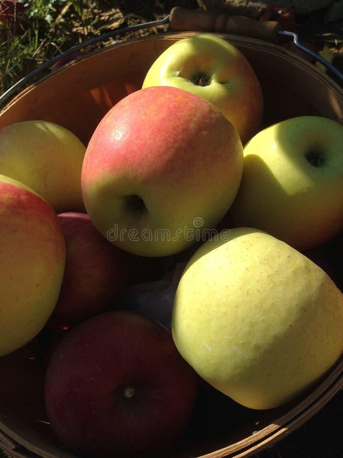 Pommes dans un groupe images stock